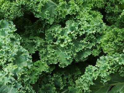 kale in a pile